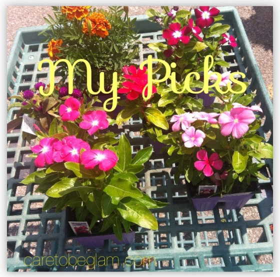 Planting a Garden...My Flower Picks