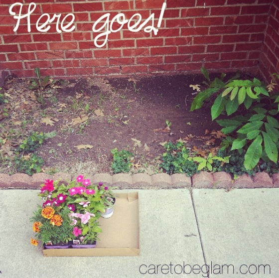 Planting a Garden...here goes nothing!